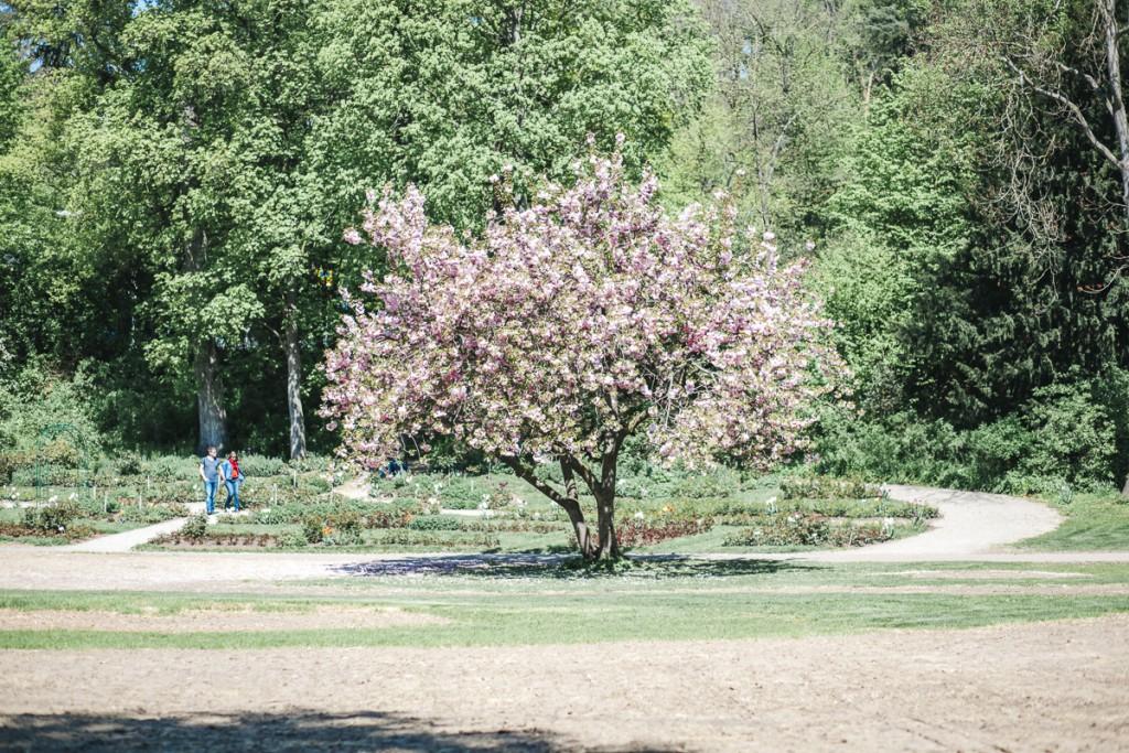Blühende Barock (13 von 42)