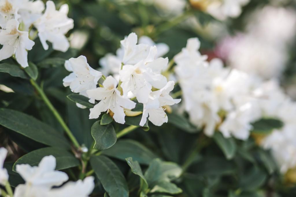 Blühende Barock (35 von 42)